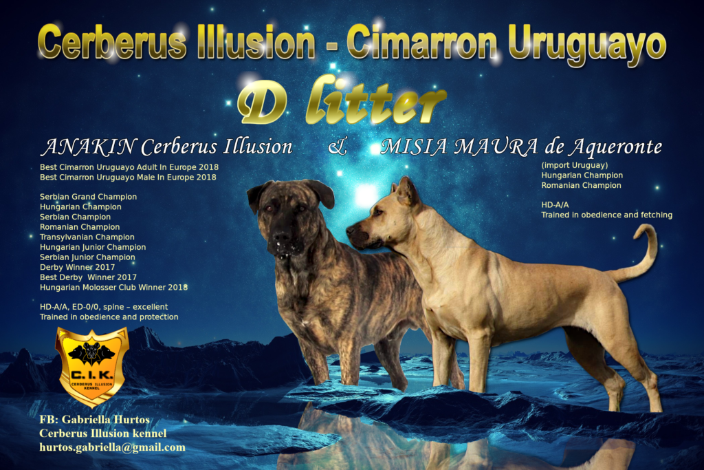 Puppy from next litter of cimarron uruguayo at Cerberus Illusion