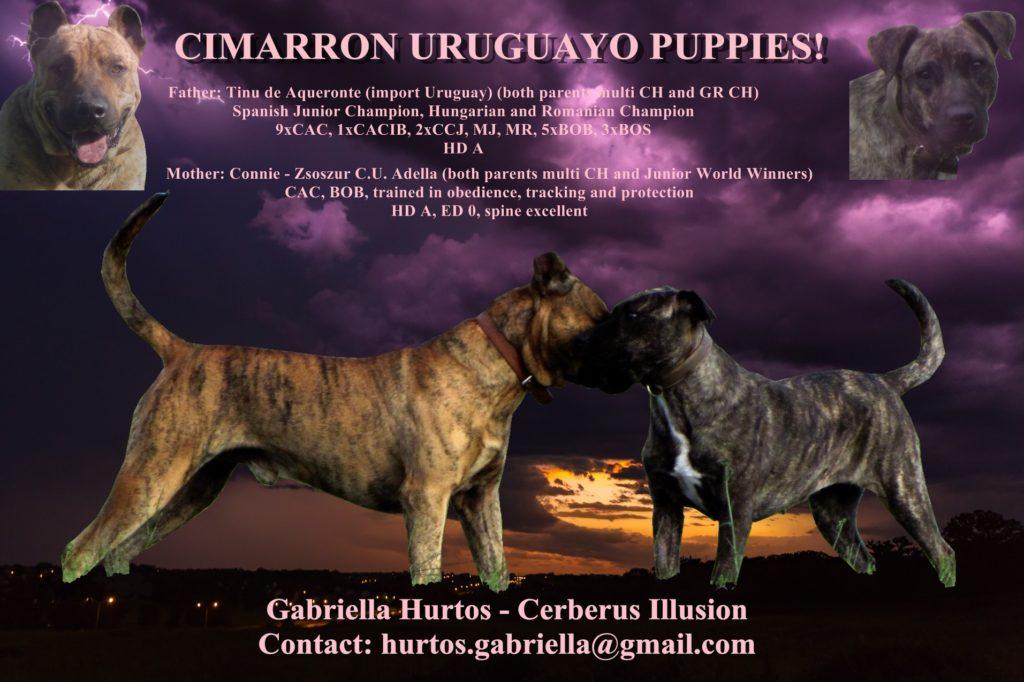 A litter Cerberus Illusion Cimarron Uruguayo