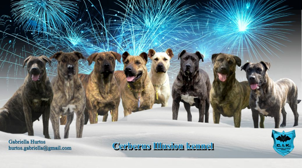 Cimarron Uruguayo Blog - Cerberus Illusion - Best Cimarron Uruguayo Kennel In Europe