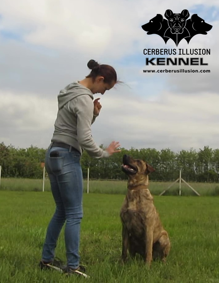 Beulah Cerberus Illusion Cimarron Uruguayo How to train your dog to stay