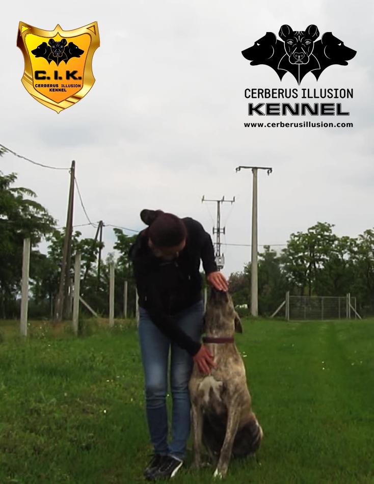 beowulf cerberus illusion cimarron uruguayo dog to heel