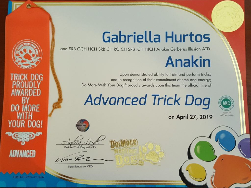 Anakin Cerberus Illusion NTD Novice Trick Dog Trikovy pes Trükk kutya
