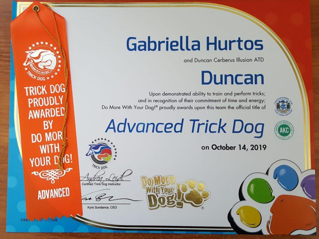 Duncan Cerberus Illusion ITD Advanced Trick Dog Trikovy pes Trükk kutya