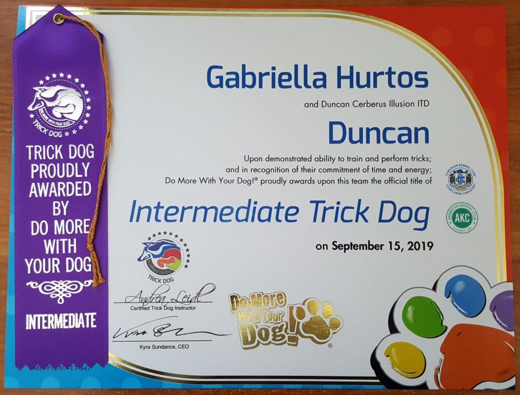 Duncan Cerberus Illusion ITD Intermediate Trick Dog Trikovy pes Trükk kutya