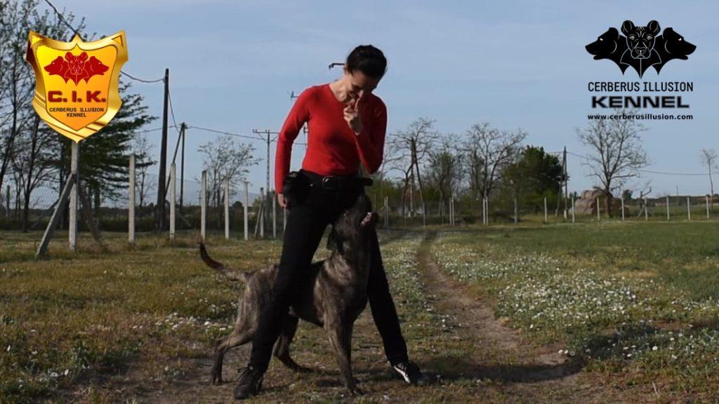 Duncan Cerberus Illusion Cimarron Uruguayo reward maškrty