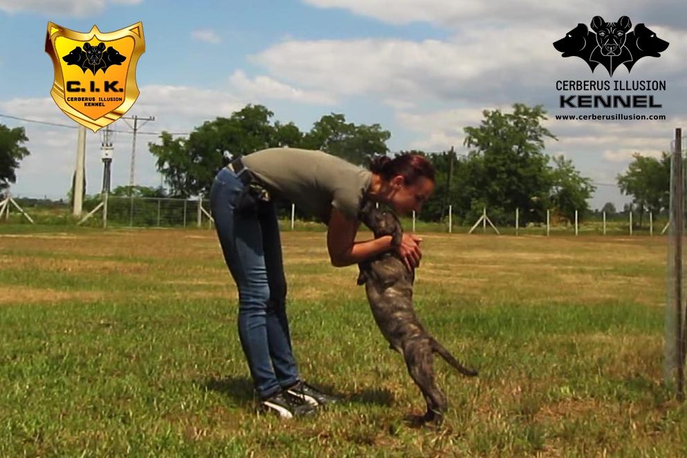 Trick dog Duncan Cerberus Illusion Cimarron Uruguayo kisses