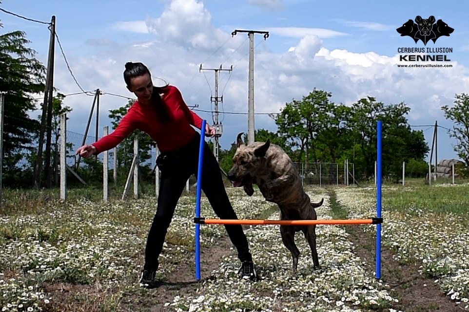 jump wraps Cimarron Uruguayo Cerberus Illusion