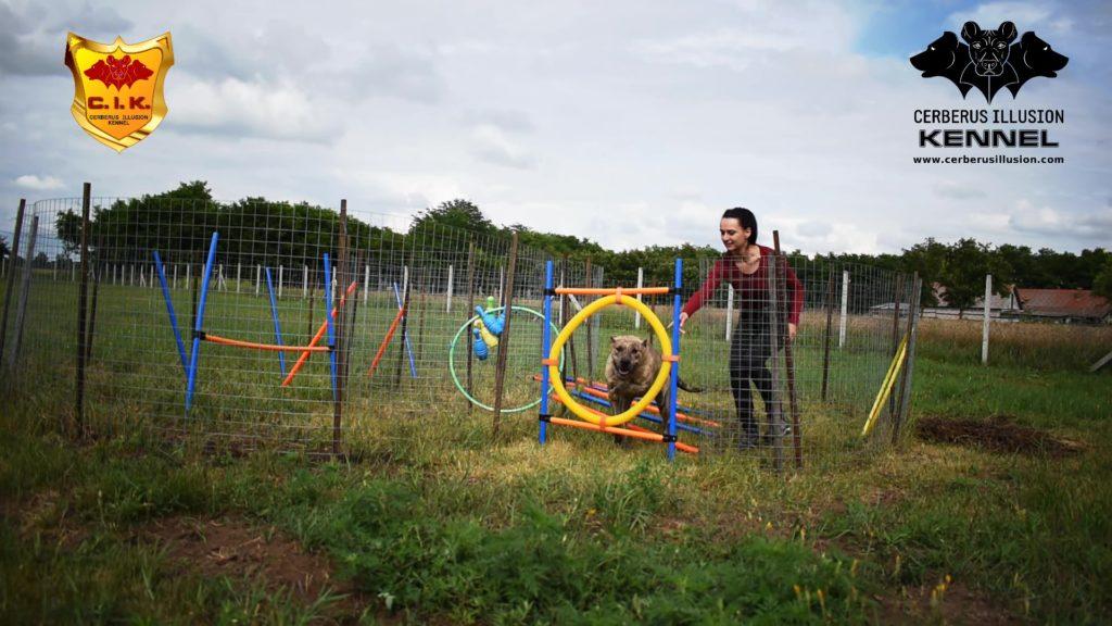 Beowulf Cerberus Illusion Cimarron Uruguayo hoop jump
