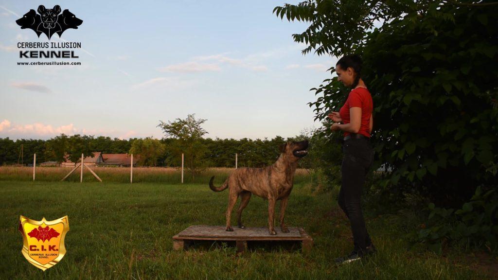Beulah Cerberus Illusion Cimarron Uruguayo pedestal 2 na/2 mimo