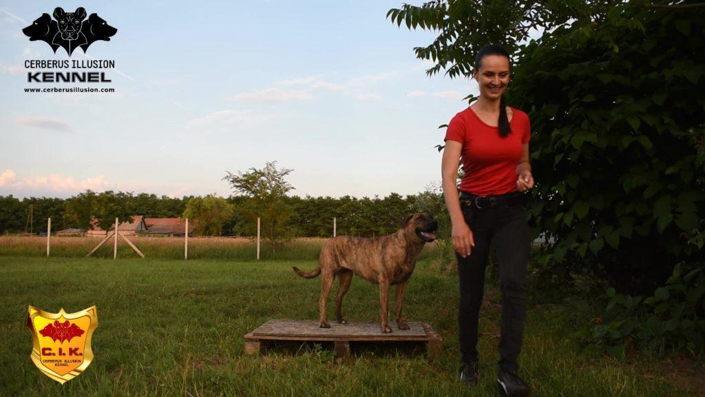 Beulah Cerberus Illusion Cimarron Uruguayo pedestal